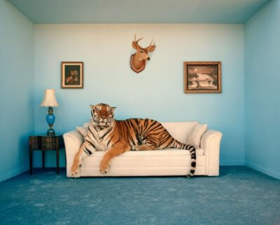 Tiger's Home